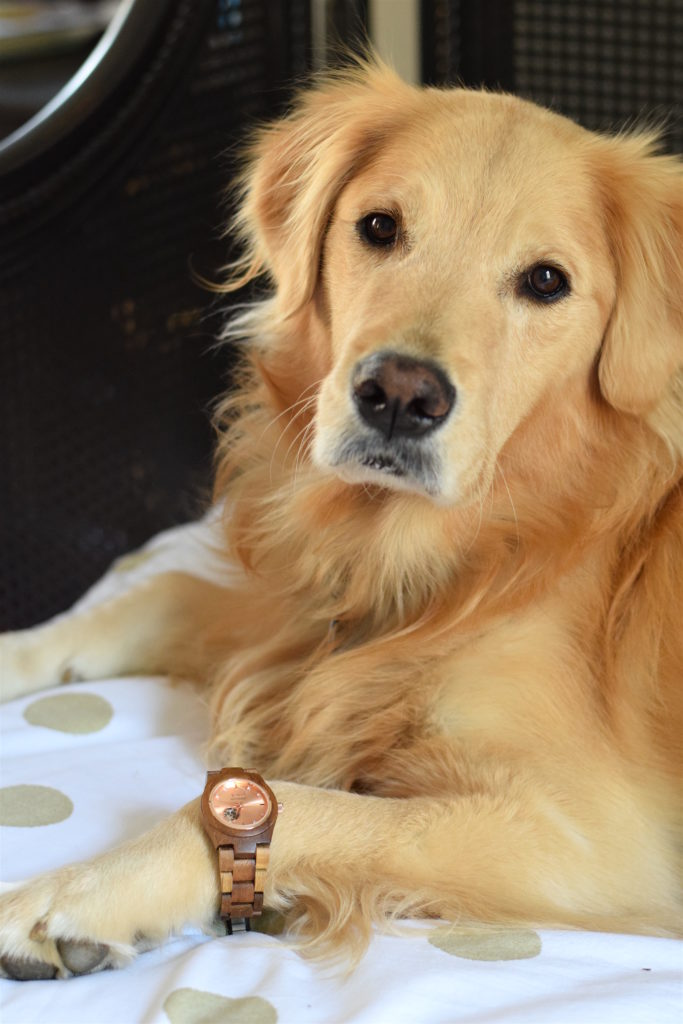 golden retriever wearing jord wood watch
