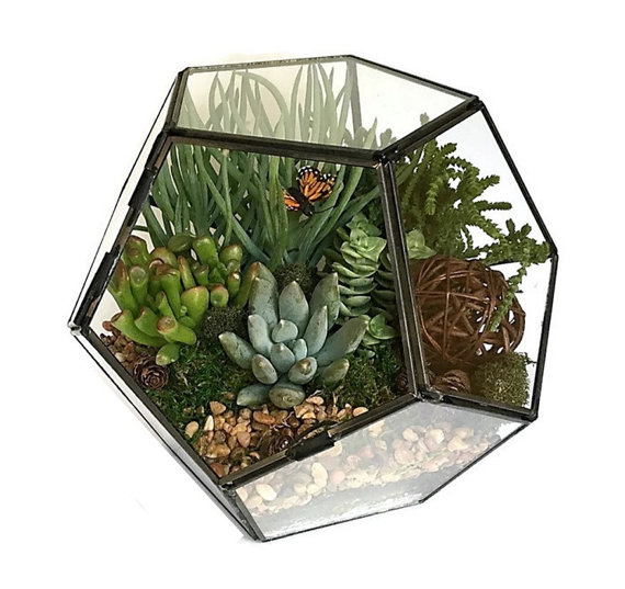 terrarium in glass box with butterfly