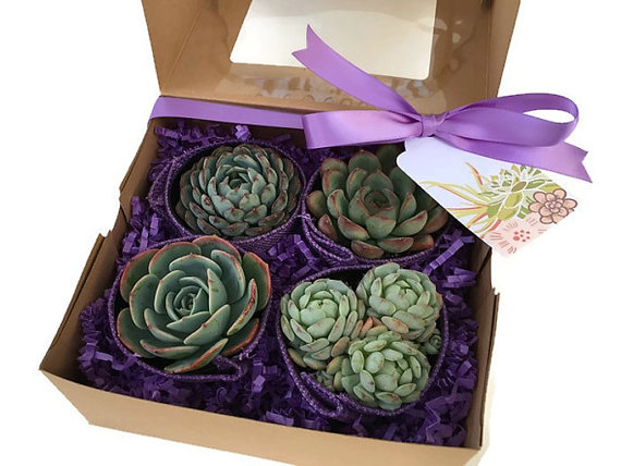 boxed succulents with purple ribbon