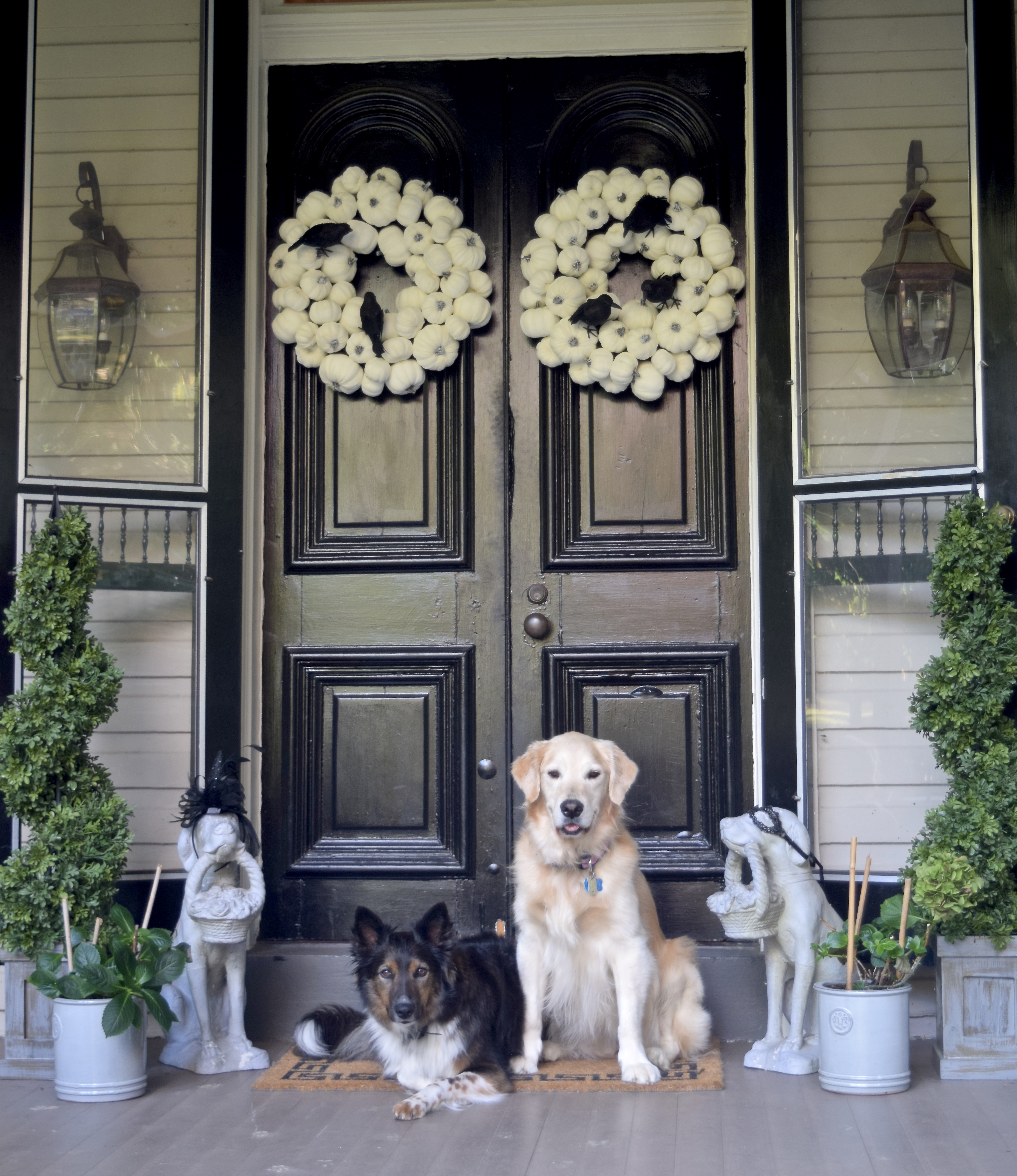 dogs on front porch with halloween decorations