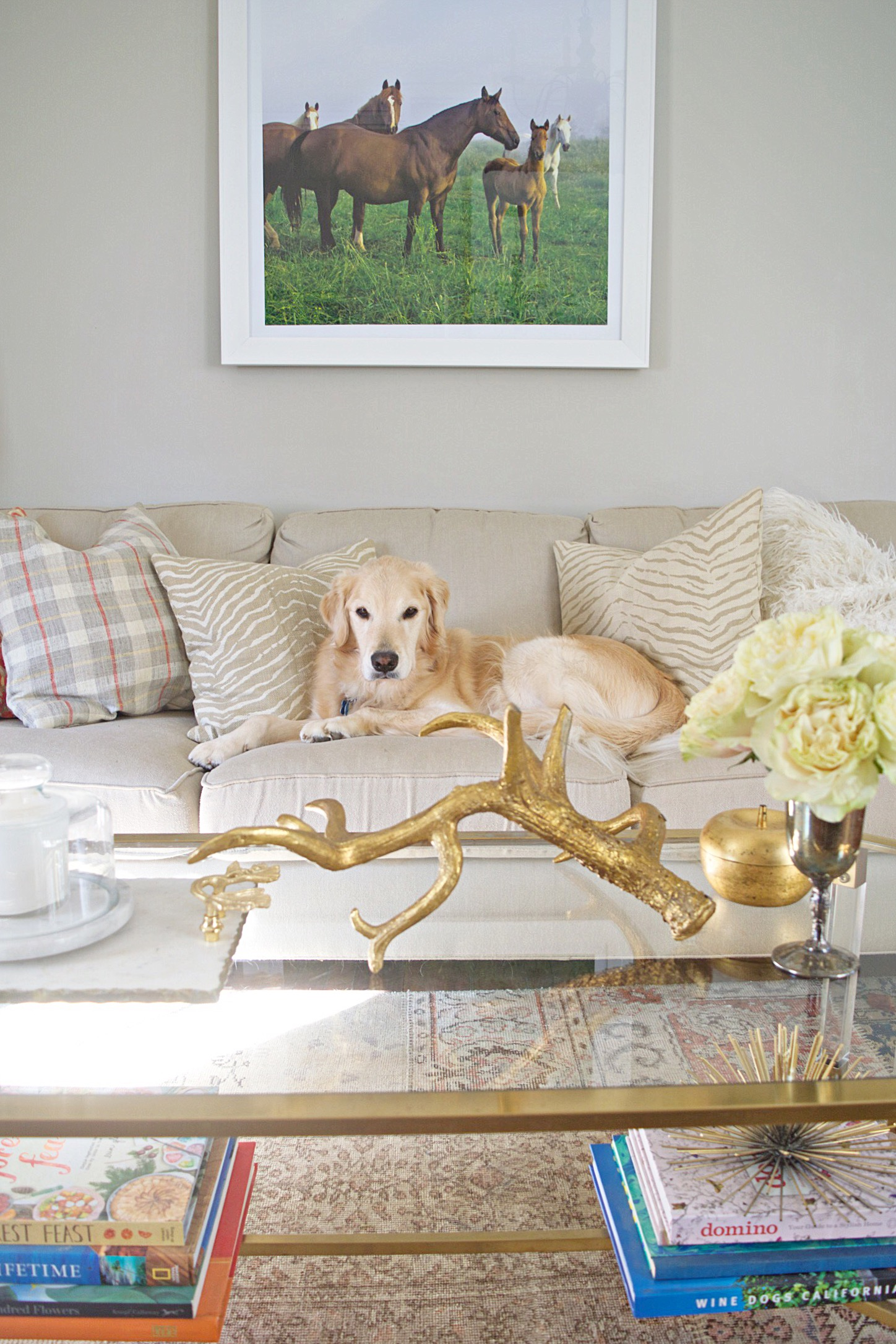 golden retriever on cream couch